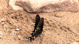 Butterfly on Rock Stock Video Footage
