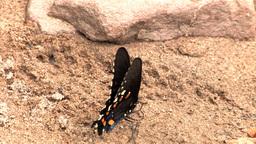 Butterfly on Rock Stock Video Footage