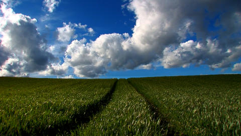 Green grass fields and clean environmental image Stock Video Footage