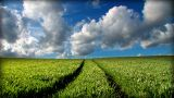 Green Grass Fields And Clean Environmental Image stock footage