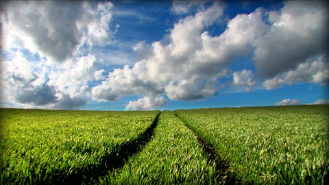 Green grass fields and clean environmental image Footage