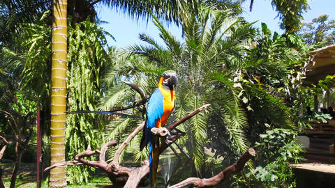 Parrot Stock Video Footage
