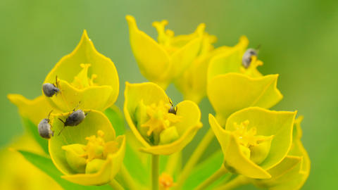 Insect pests eat wild flowers (macro) Stock Video Footage