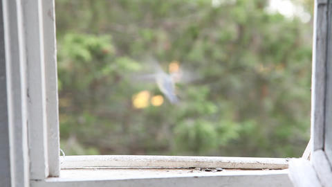 Small tit on a open window Stock Video Footage