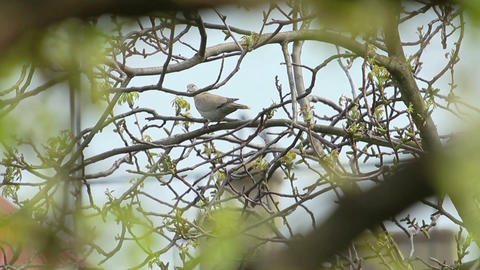 Bird Footage