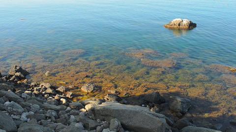 Beautiful sea landscape.marine algae Stock Video Footage