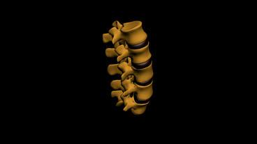 model of spine,medicine,health,human,skeleton Stock Video Footage