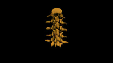 model of spine,medicine,health,human,skeleton Animation