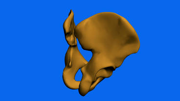 Model of hip bone,medical Animation