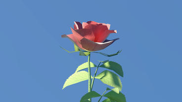 Red roses,leaves and branches Stock Video Footage