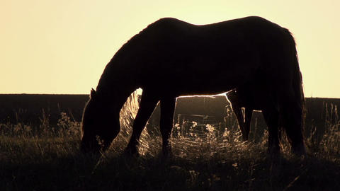 Horses In The Pasture. Slow Motion 1
