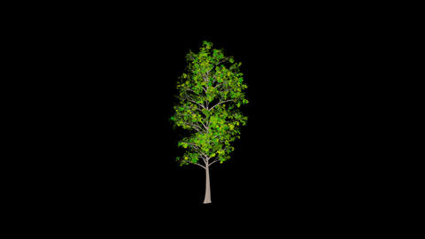 Animation Tree 3 Animation