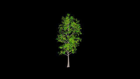 Animation Tree 3 Stock Video Footage