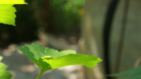Worm on Leaves 1 Stock Video Footage