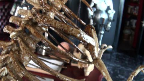 The skeleton of lizard Stock Video Footage