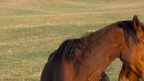 Pair of Horses Stock Video Footage