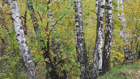 Autumnal forest sequence Stock Video Footage