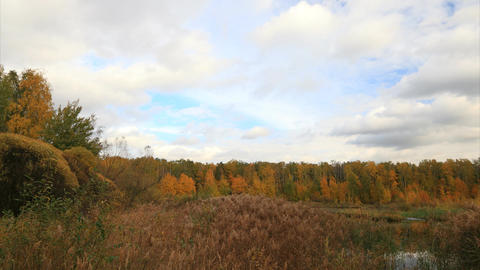 Autumnal forest timelapse Stock Video Footage