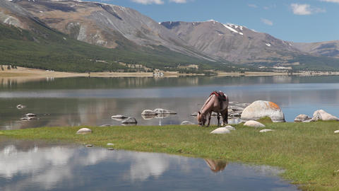 Horse eat grass at mountain lake Khoton Nuur in Mongolian... Stock Video Footage