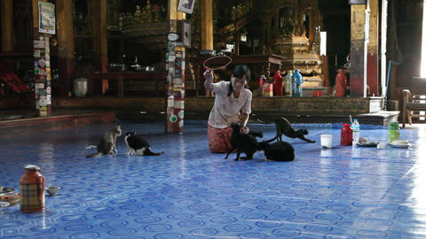 Jumping cats in Nga Phe Kyaung Monastery Footage