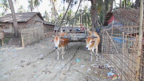 Bull cart Stock Video Footage