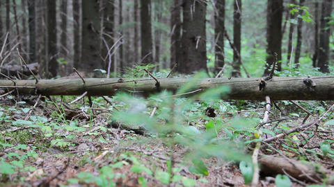 Through the forest Stock Video Footage