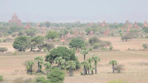Panorama of Bagan Footage