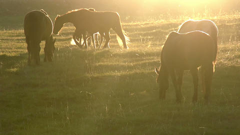 Morning Pasture Footage