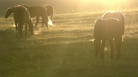 Morning Pasture Stock Video Footage