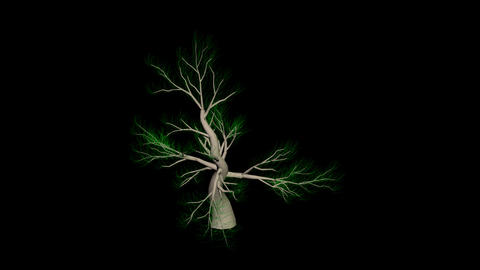 Fantastic tree 2 Animation