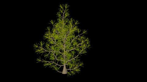 Fantastic tree 4 Stock Video Footage