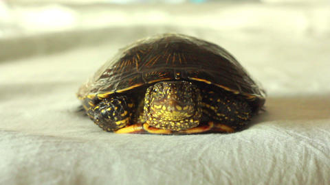 Turtle 1 stock footage