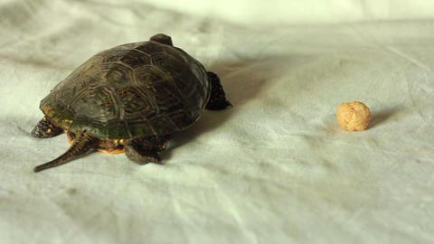 Turtle 5 Footage
