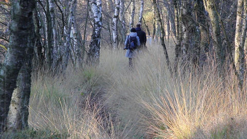 family walking through forest Stock Video Footage