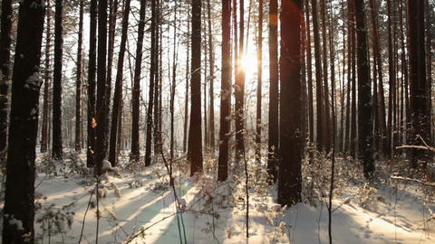 Movement through the dark forest to meet the sun Stock Video Footage