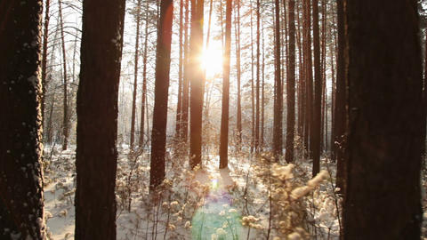 Movement through the dark forest to meet the sun Footage
