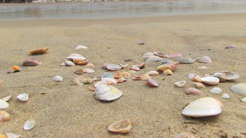 Shells on the beach Footage