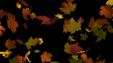Autumn Leaves Loop Stock Video Footage