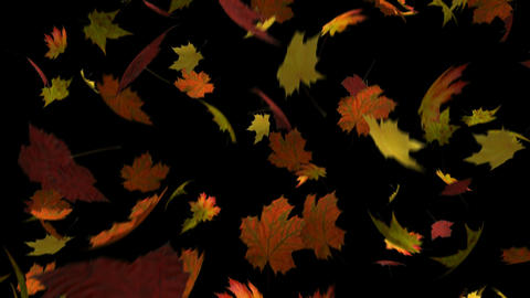 Autumn Leaves Loop stock footage