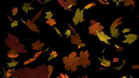 Autumn Leaves Loop Animation