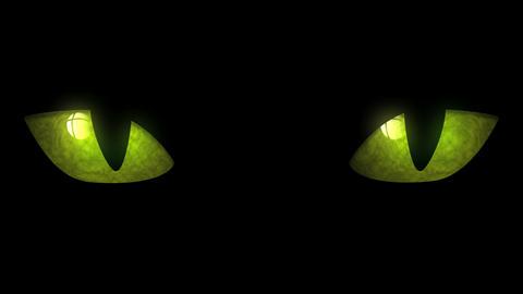 Cat Eyes Blinking Loop Stock Video Footage