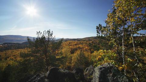 Sun rays through the autumn forest Stock Video Footage
