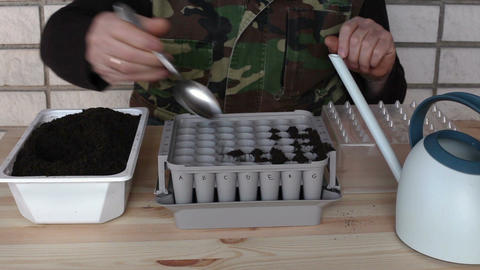 Preparing nursery box for onion seeding 2a Stock Video Footage