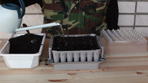 Preparing nursery box for onion seeding 2c Stock Video Footage