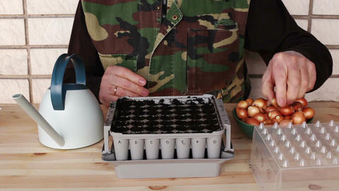 Planting onion bulbs in nursery box 4a Stock Video Footage