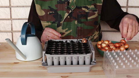 Planting onion bulbs in nursery box 4a Footage
