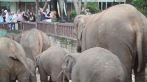 Elephants walk Stock Video Footage