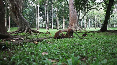 Monkey activity Stock Video Footage