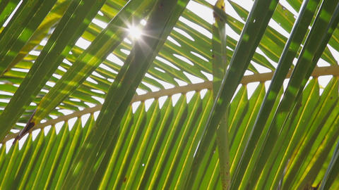 Palm leaves pan Stock Video Footage