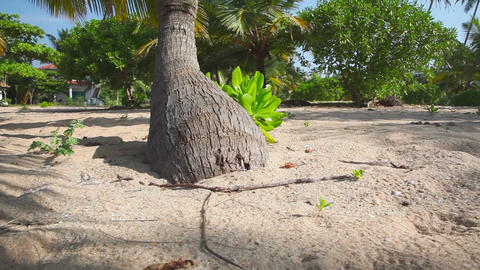 Palm trunk Stock Video Footage